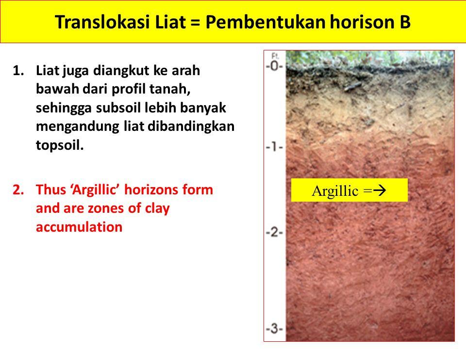 Translokasi Liat = Pembentukan horison B