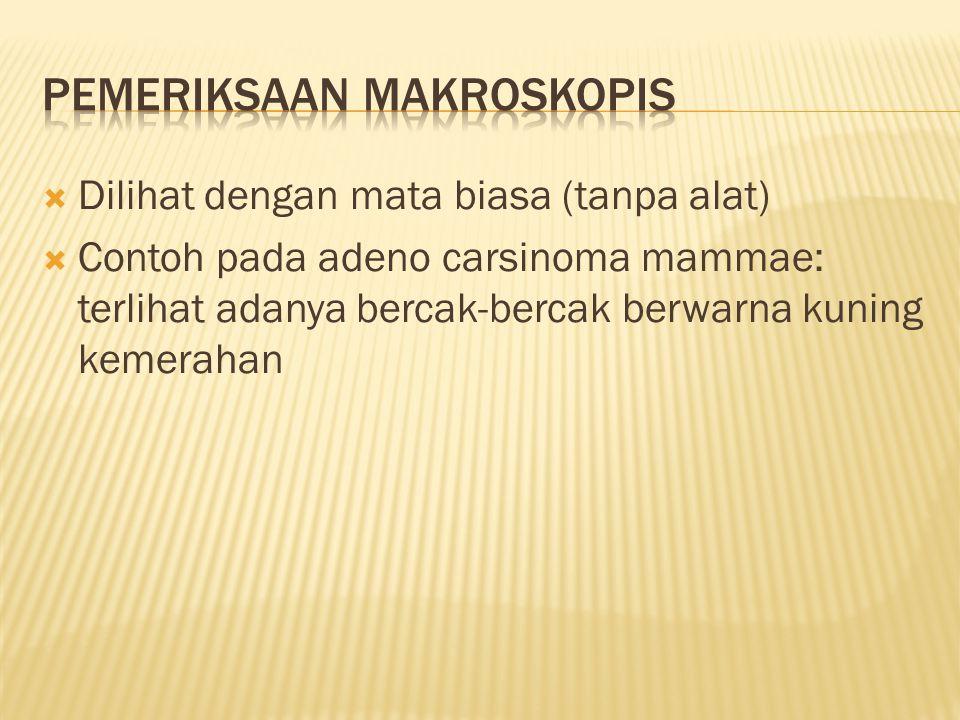 Pemeriksaan makroskopis