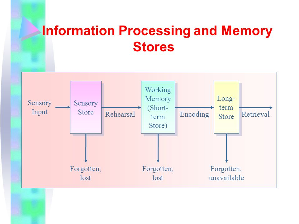 Information Processing and Memory Stores