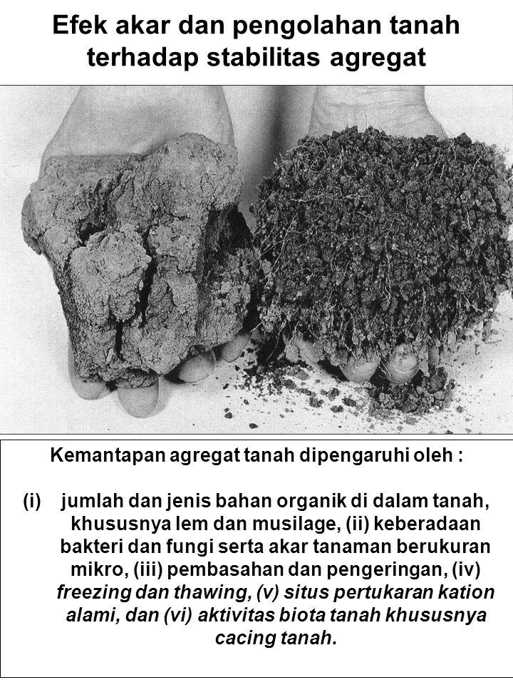 Efek akar dan pengolahan tanah terhadap stabilitas agregat