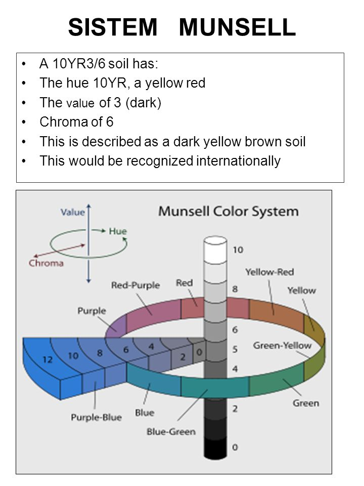 SISTEM MUNSELL A 10YR3/6 soil has: The hue 10YR, a yellow red