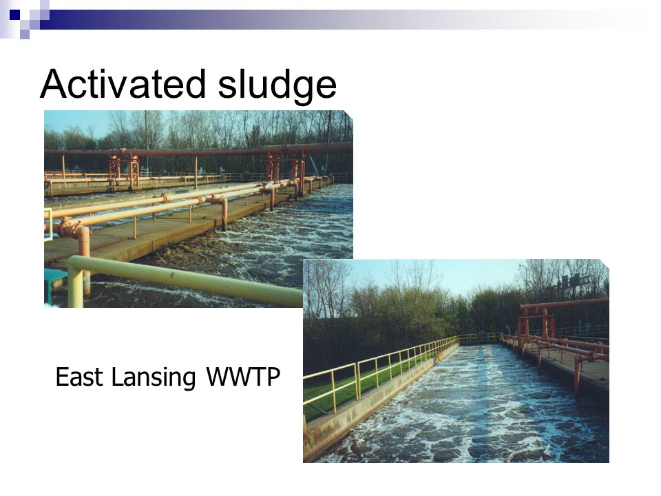 Activated sludge East Lansing WWTP