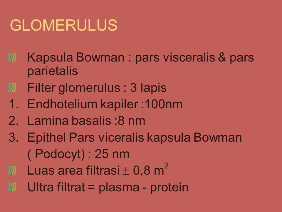 GLOMERULUS Kapsula Bowman : pars visceralis & pars parietalis