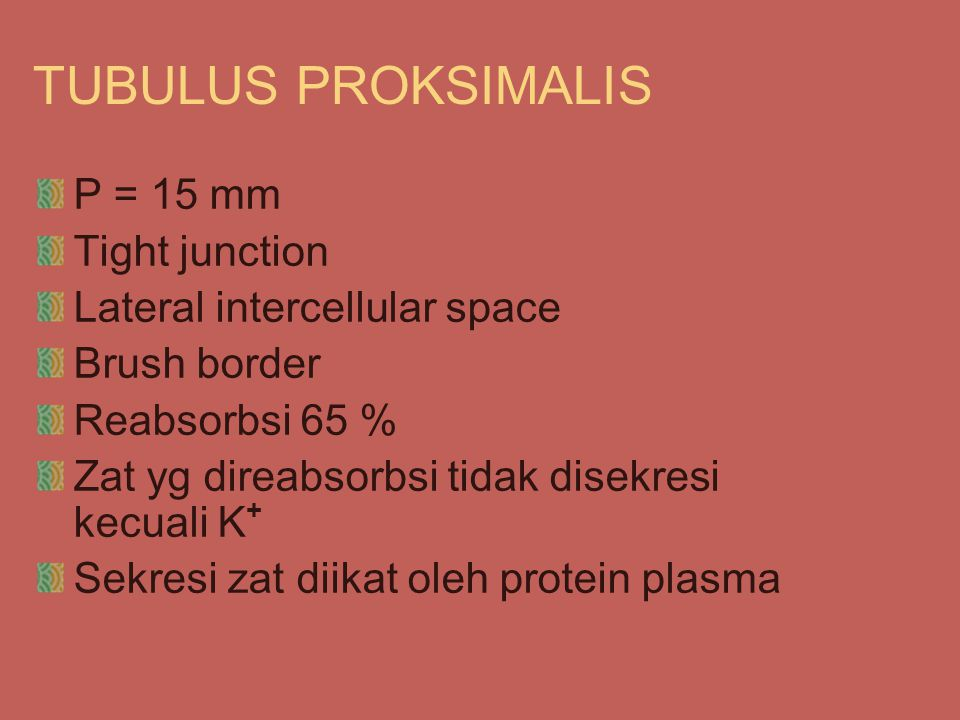 TUBULUS PROKSIMALIS P = 15 mm Tight junction