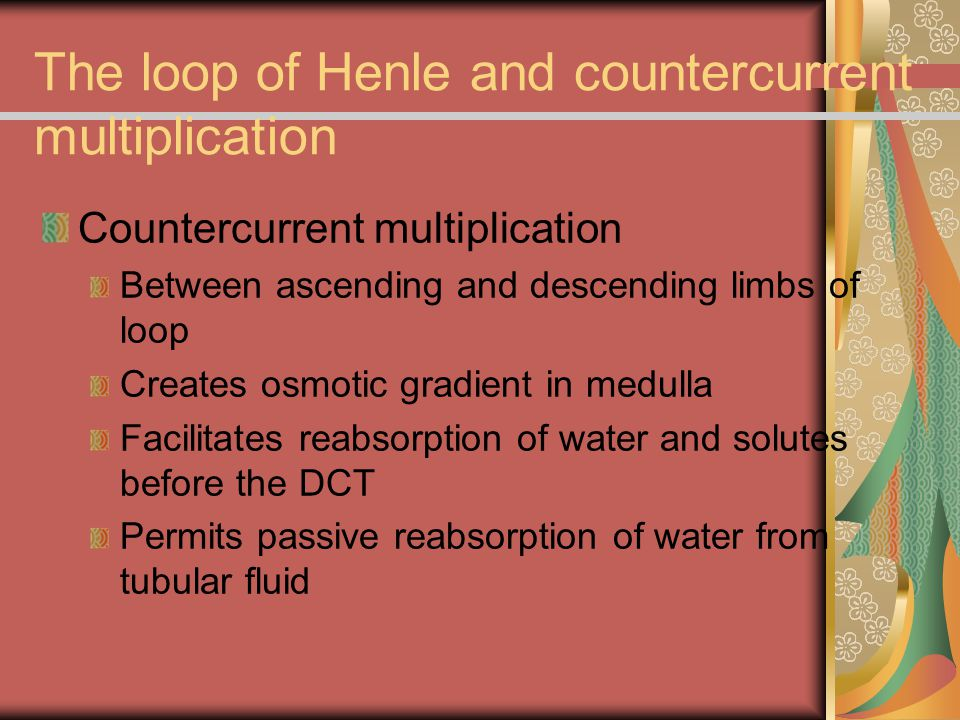 The loop of Henle and countercurrent multiplication