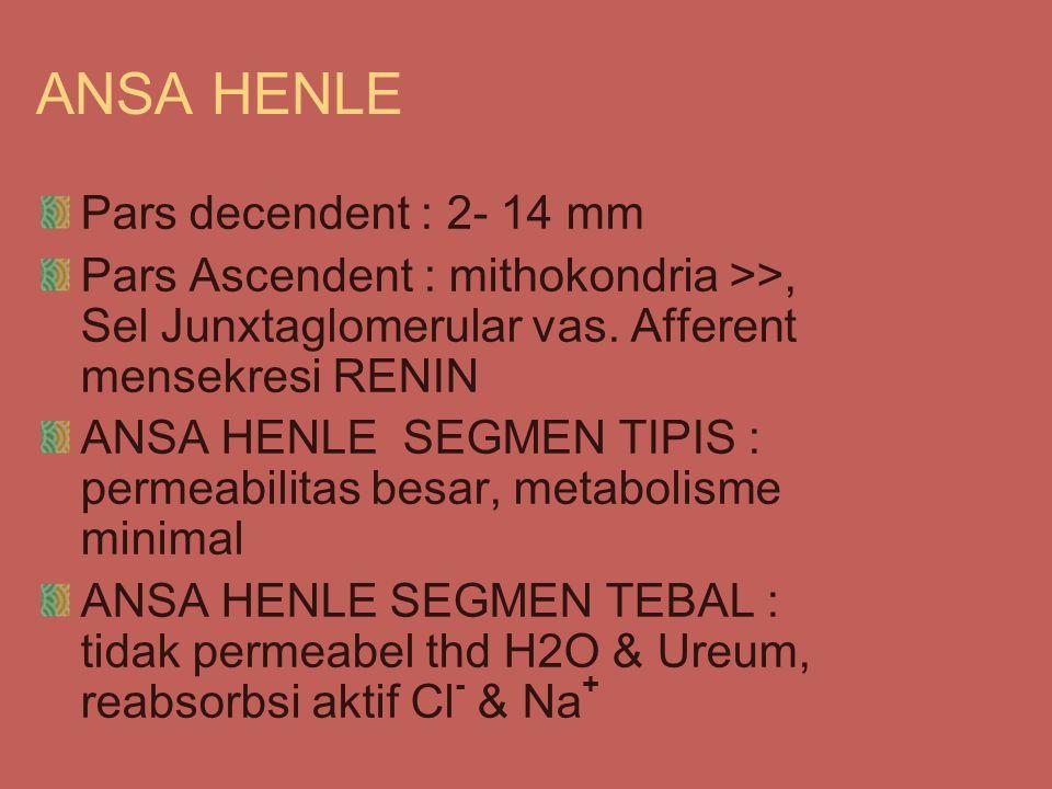 ANSA HENLE Pars decendent : 2- 14 mm