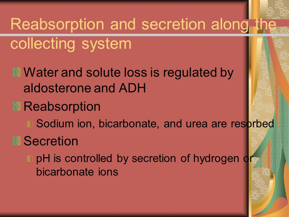 Reabsorption and secretion along the collecting system