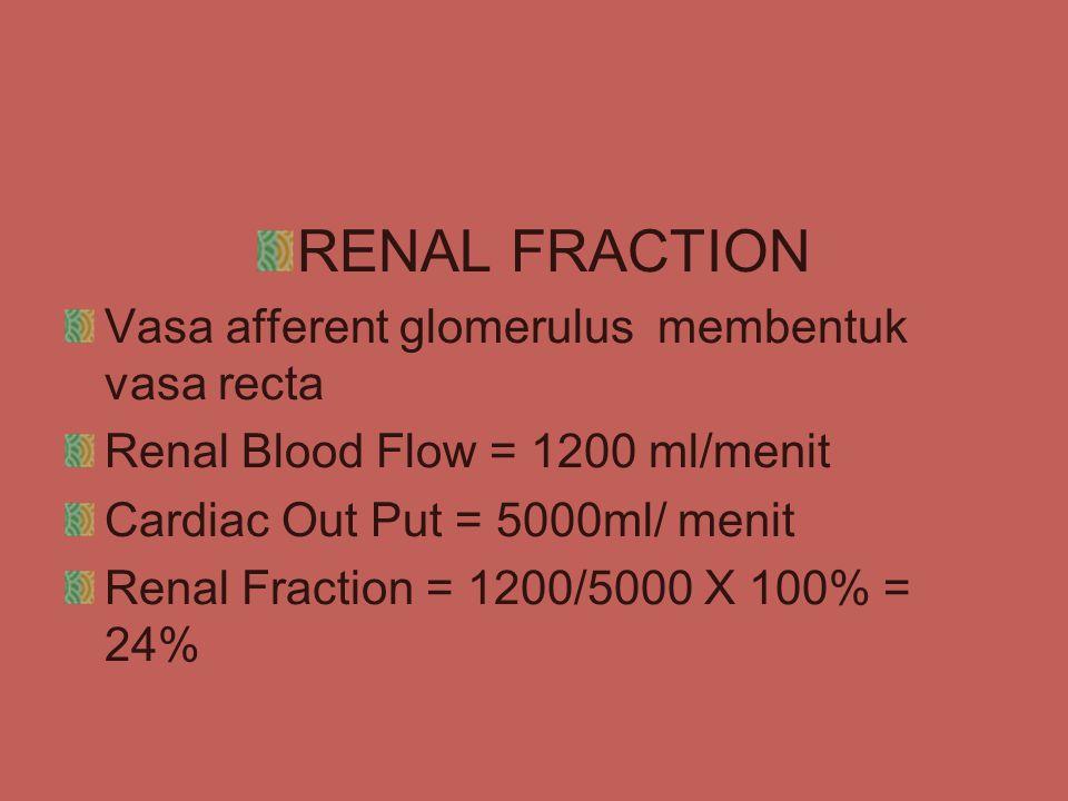 RENAL FRACTION Vasa afferent glomerulus membentuk vasa recta