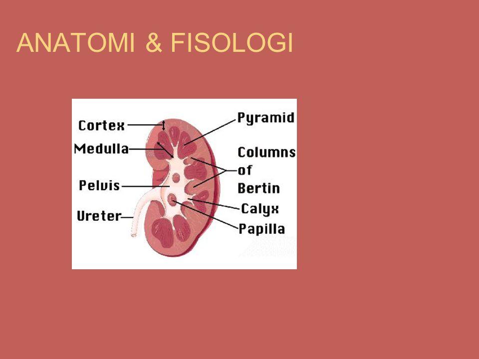 ANATOMI & FISOLOGI