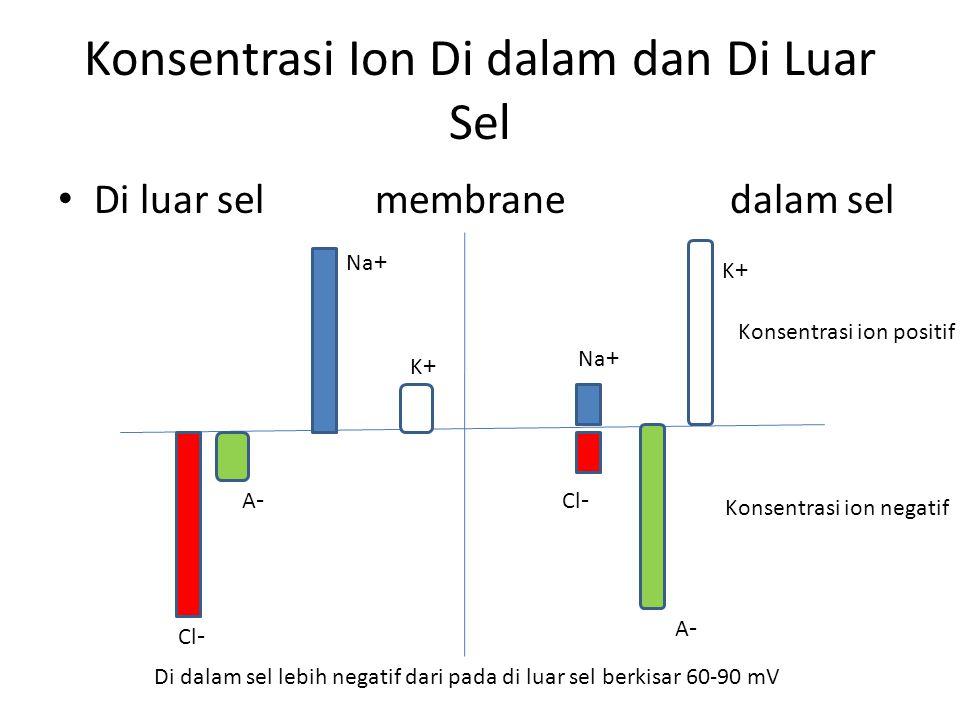 Konsentrasi Ion Di dalam dan Di Luar Sel