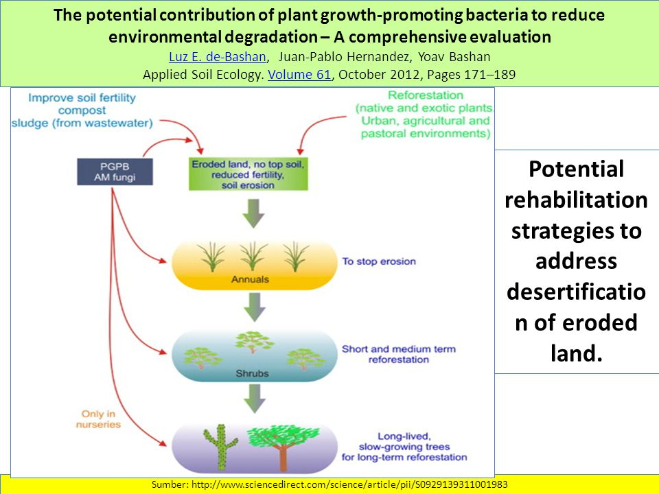 The potential contribution of plant growth-promoting bacteria to reduce environmental degradation – A comprehensive evaluation