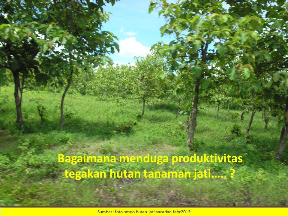 Bagaimana menduga produktivitas tegakan hutan tanaman jati…..