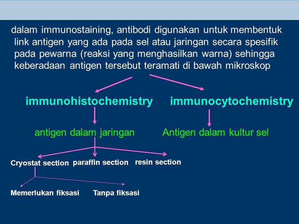 antigen dalam jaringan
