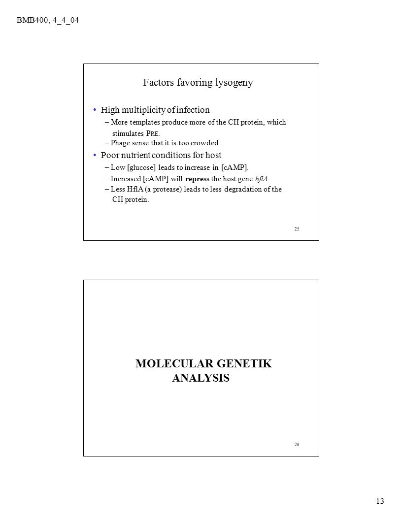 MOLECULAR GENETIK ANALYSIS Factors favoring lysogeny