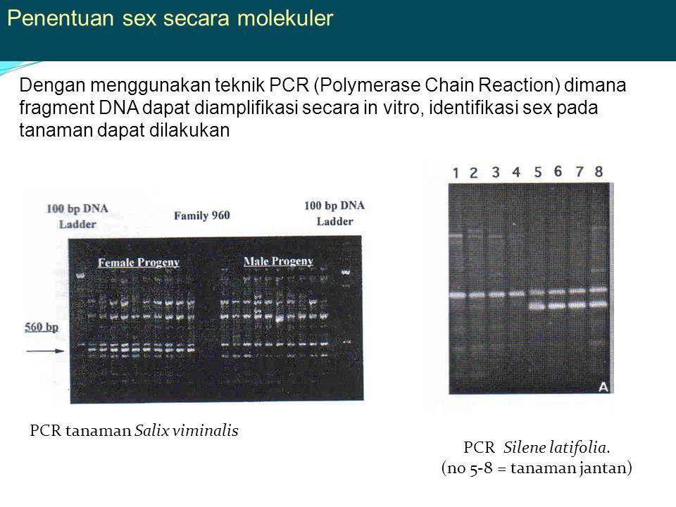 Penentuan sex secara molekuler