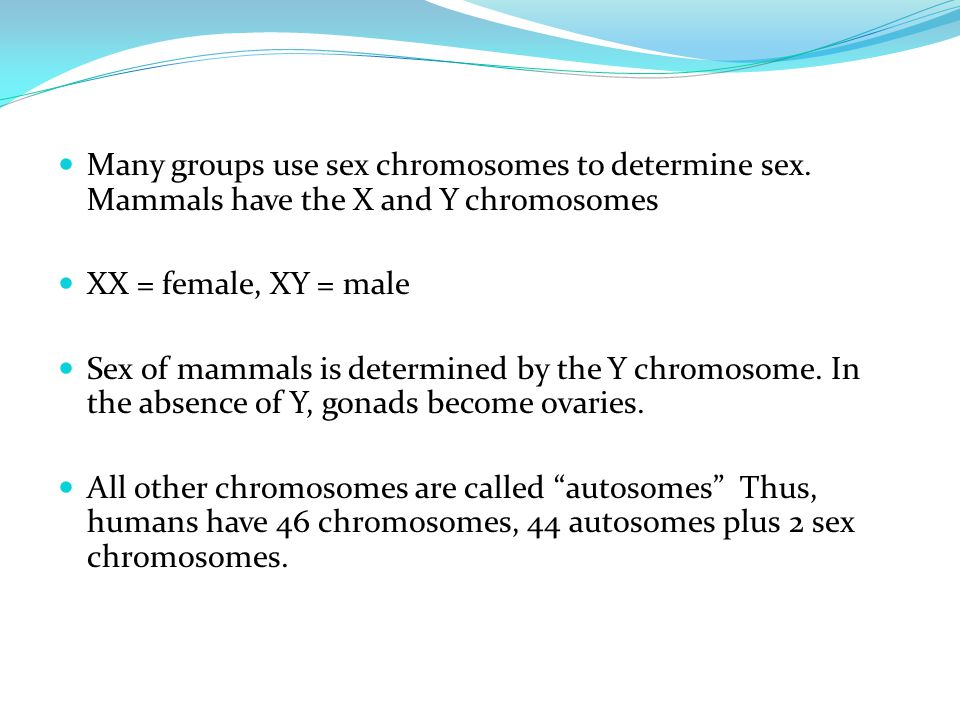Many groups use sex chromosomes to determine sex