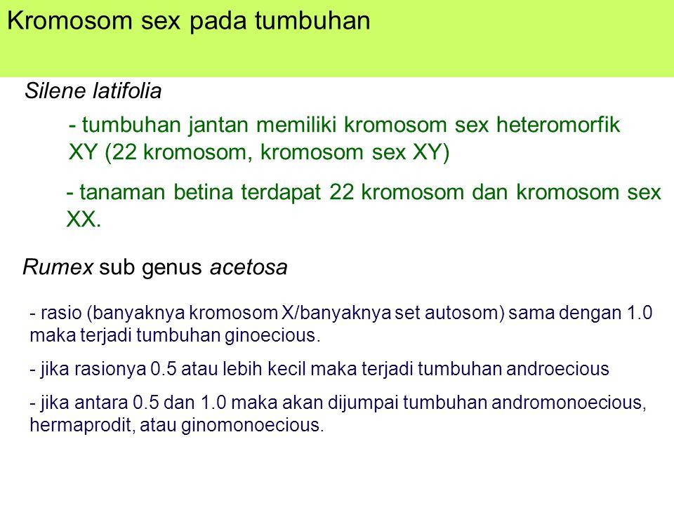 Kromosom sex pada tumbuhan