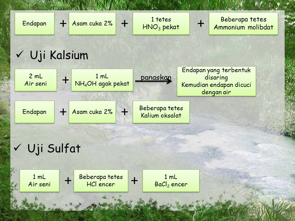+ + + + + + + + Uji Kalsium Uji Sulfat panaskan HNO3 pekat