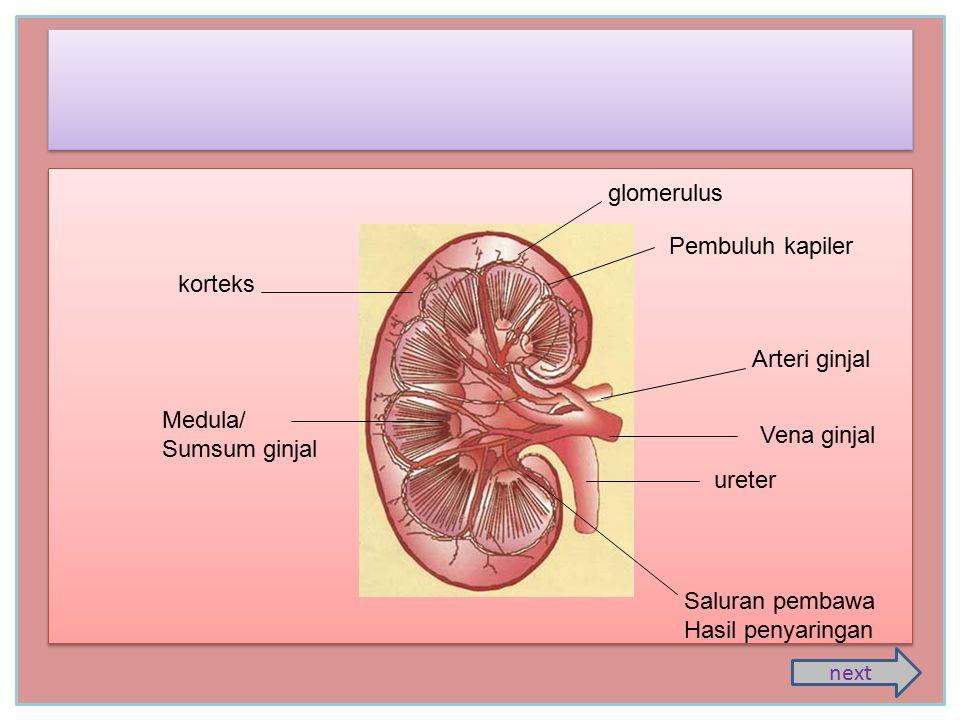 glomerulus Pembuluh kapiler. korteks. Arteri ginjal. Medula/ Sumsum ginjal. Vena ginjal. ureter.