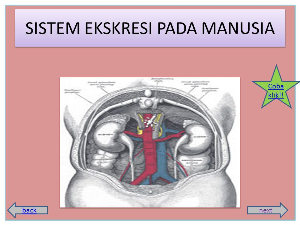 SISTEM EKSKRESI PADA MANUSIA