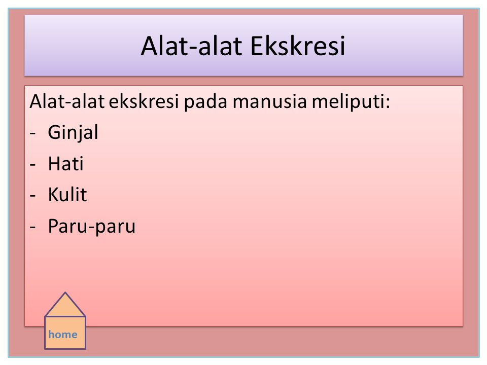 Alat-alat Ekskresi Alat-alat ekskresi pada manusia meliputi: Ginjal