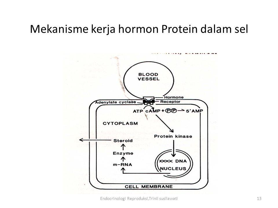 Mekanisme kerja hormon Protein dalam sel