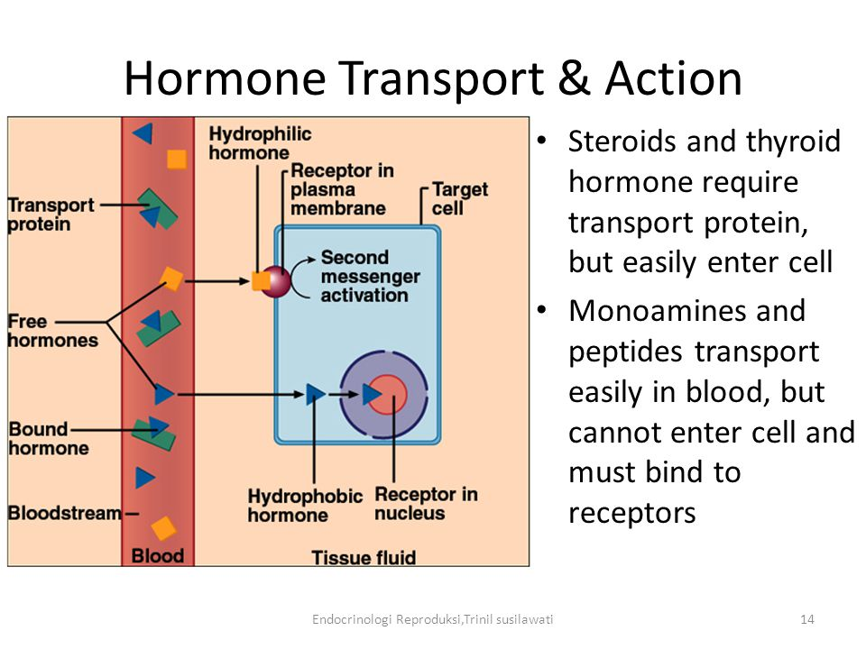 Hormone Transport & Action