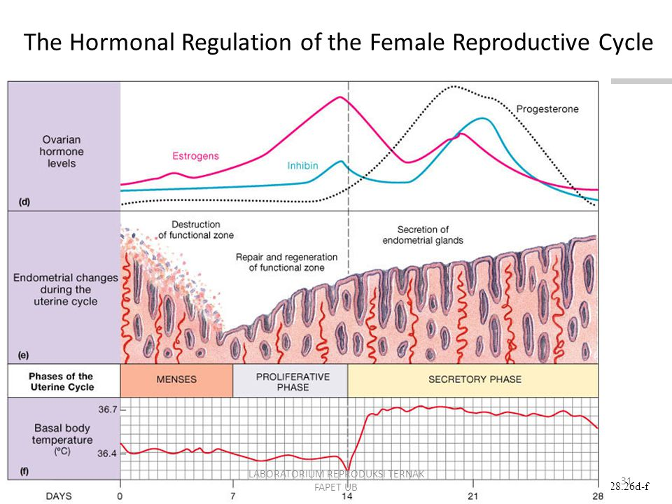 The Hormonal Regulation of the Female Reproductive Cycle