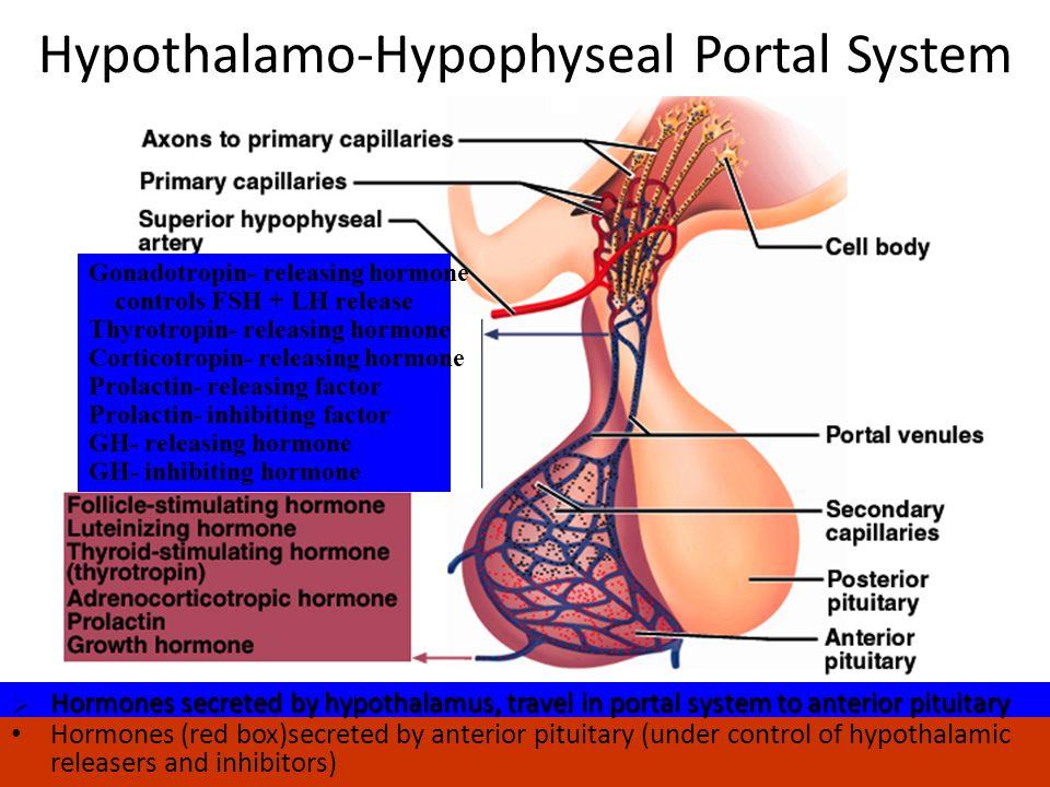 Hypothalamo-Hypophyseal Portal System