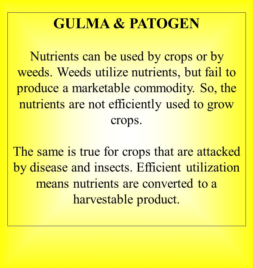 GULMA & PATOGEN Nutrients can be used by crops or by