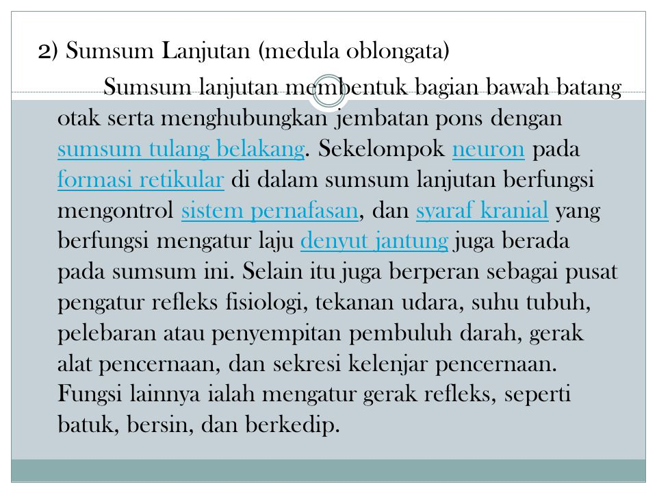 2) Sumsum Lanjutan (medula oblongata)