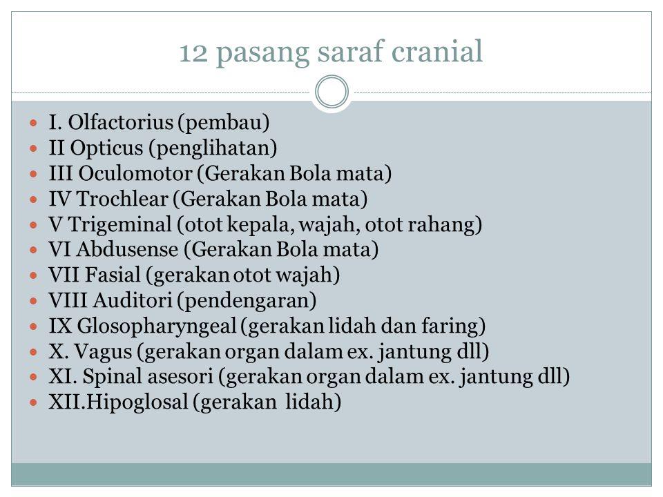 12 pasang saraf cranial I. Olfactorius (pembau)