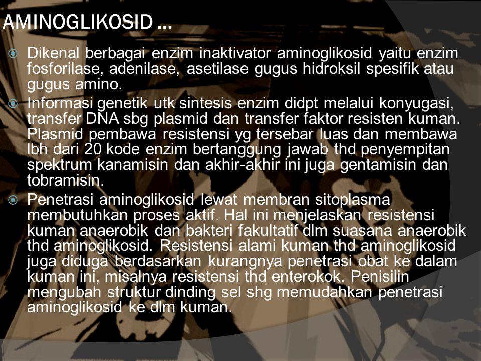 AMINOGLIKOSID …