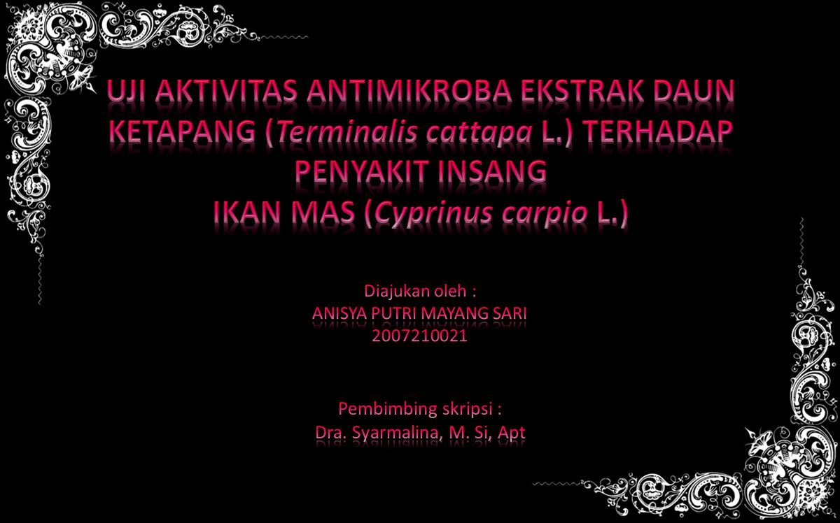 IKAN MAS (Cyprinus carpio L.)