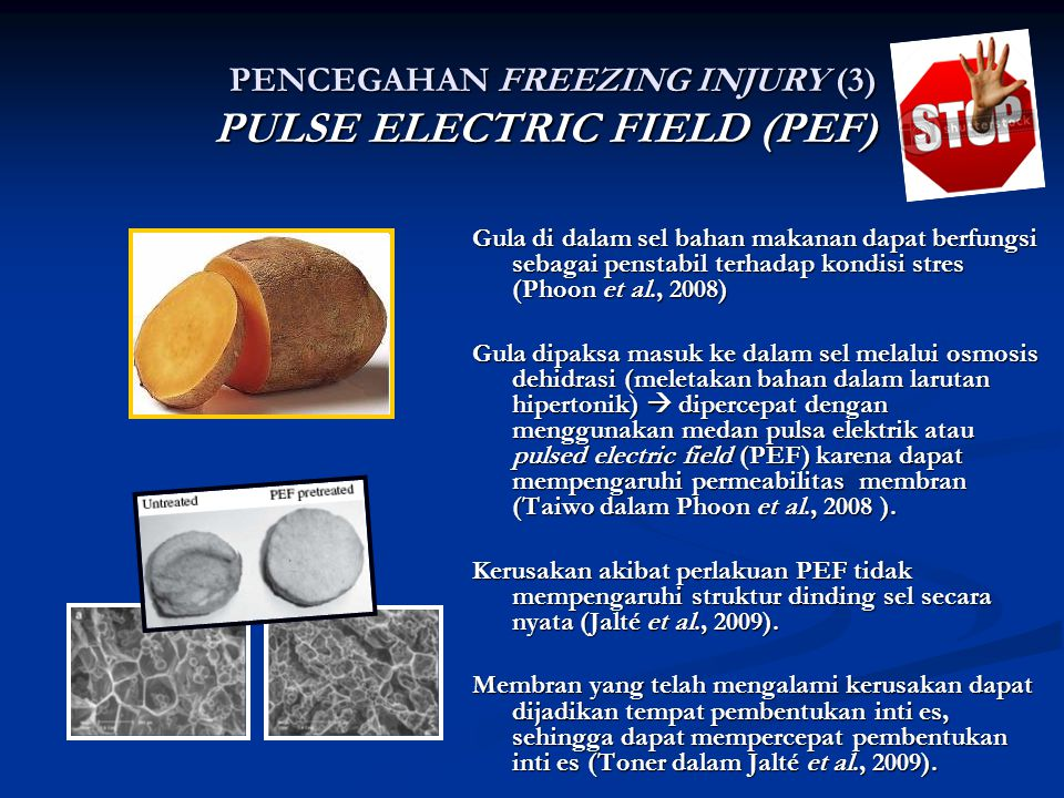 PULSE ELECTRIC FIELD (PEF)