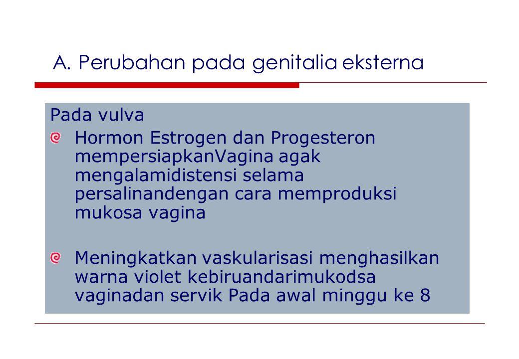 A. Perubahan pada genitalia eksterna