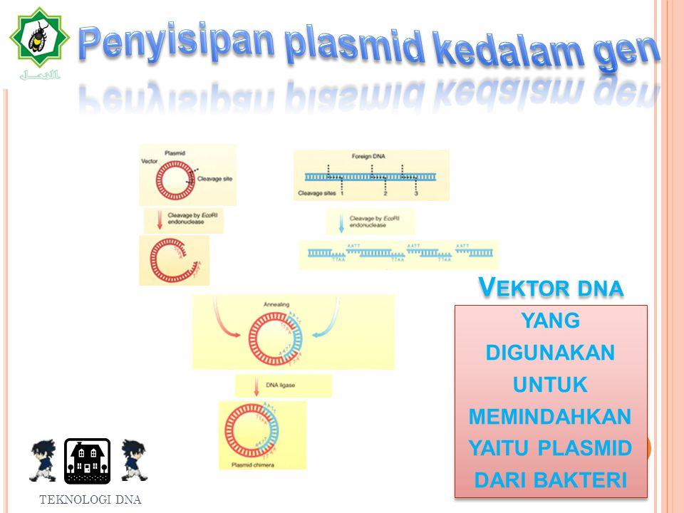 Vektor dna yang digunakan untuk memindahkan yaitu plasmid dari bakteri