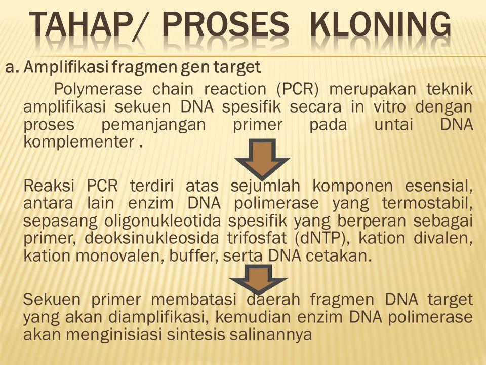 TAHAP/ PROSES KLONING
