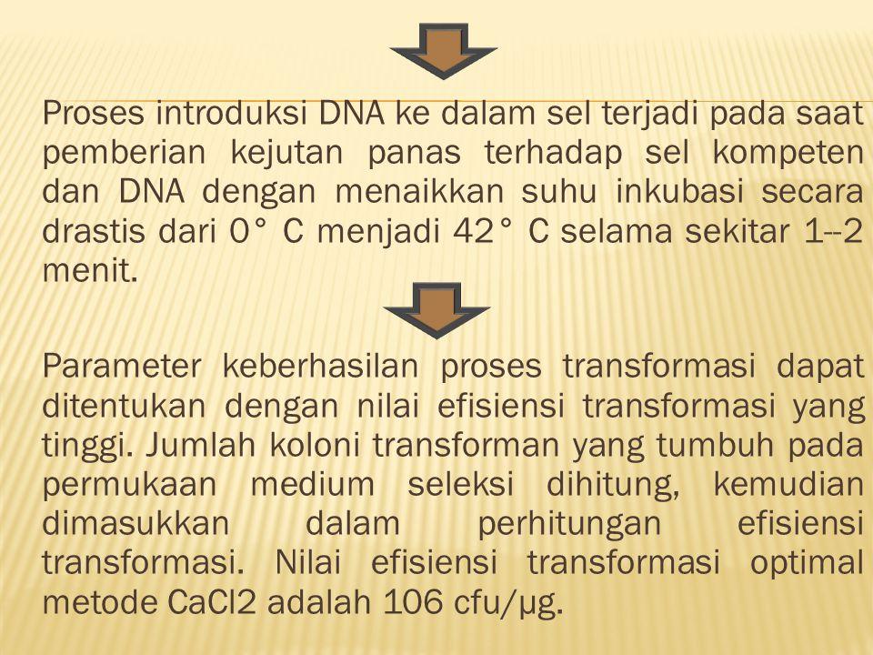 Proses introduksi DNA ke dalam sel terjadi pada saat pemberian kejutan panas terhadap sel kompeten dan DNA dengan menaikkan suhu inkubasi secara drastis dari 0° C menjadi 42° C selama sekitar 1--2 menit.