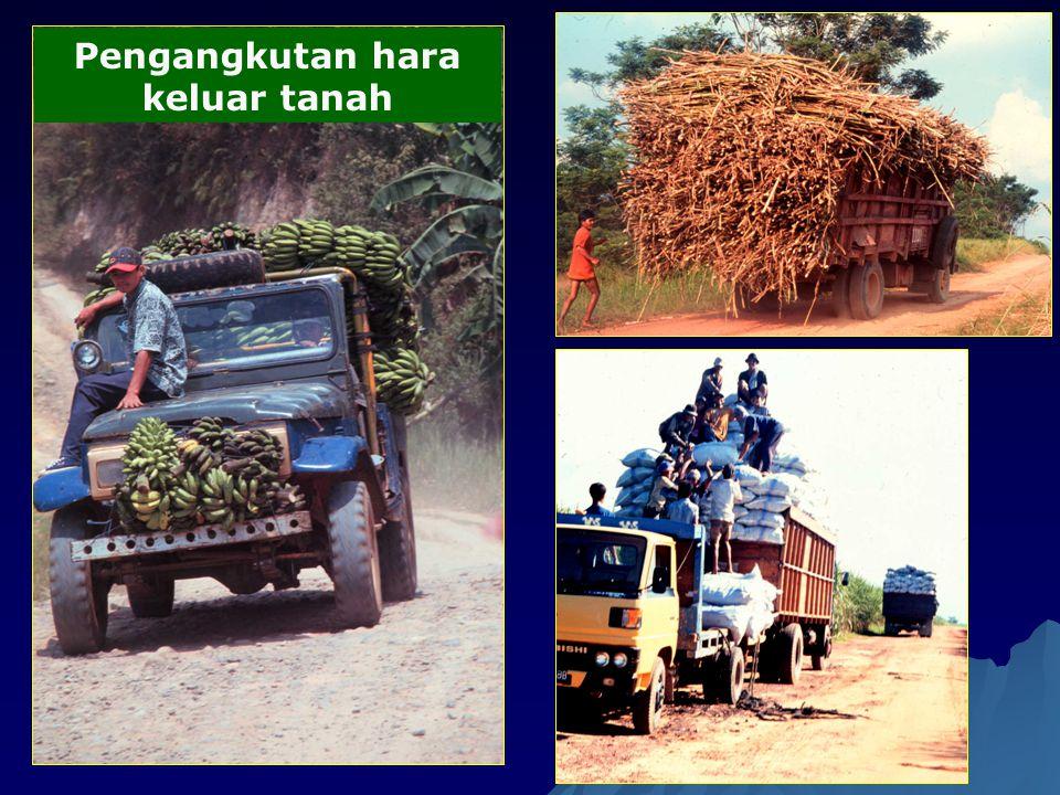 Pengangkutan hara keluar tanah