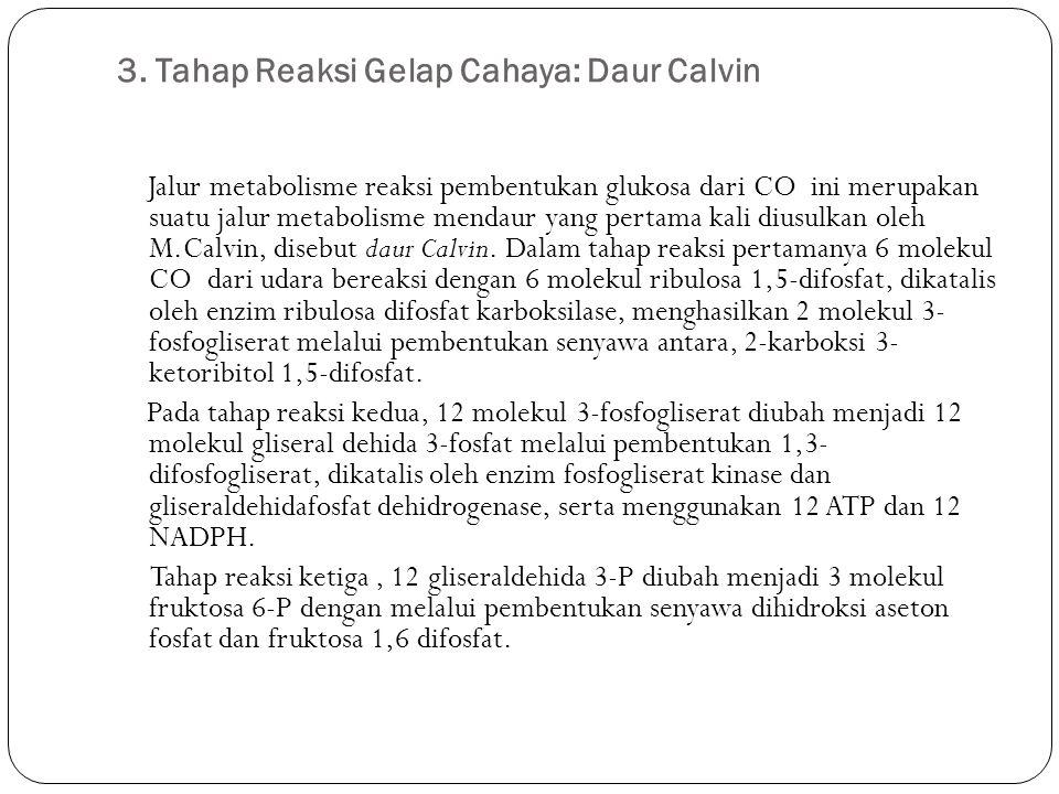 3. Tahap Reaksi Gelap Cahaya: Daur Calvin
