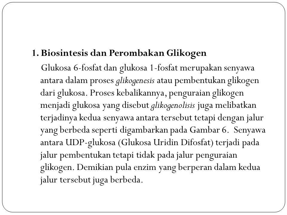 1. Biosintesis dan Perombakan Glikogen