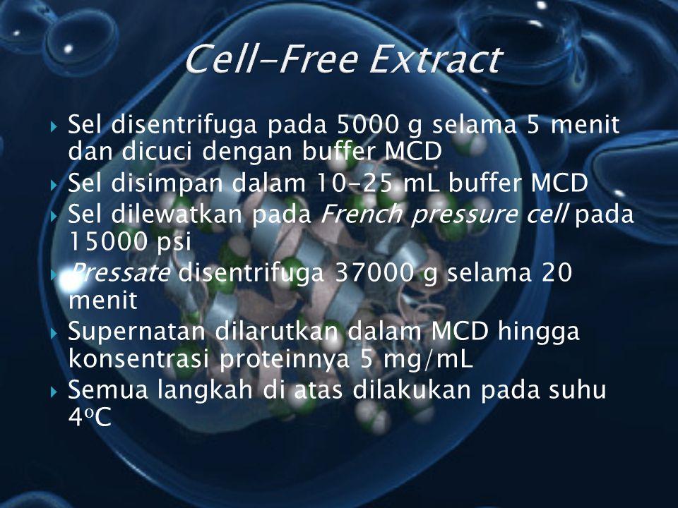 Cell-Free Extract Sel disentrifuga pada 5000 g selama 5 menit dan dicuci dengan buffer MCD. Sel disimpan dalam 10-25 mL buffer MCD.