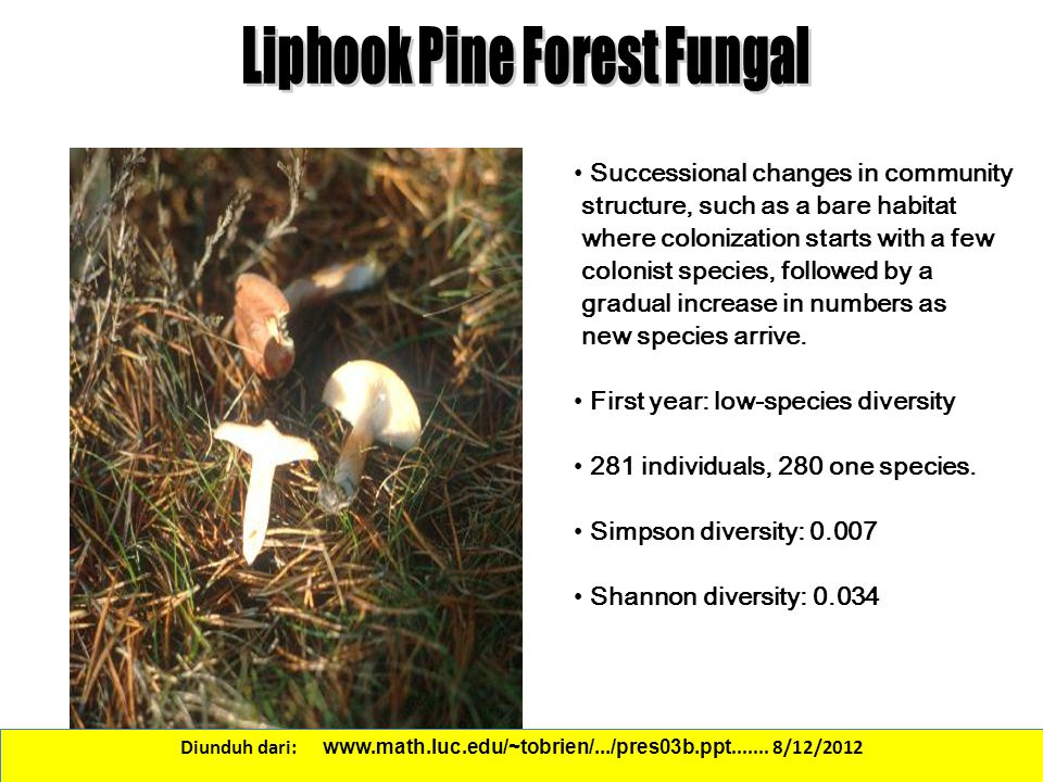 Liphook Pine Forest Fungal