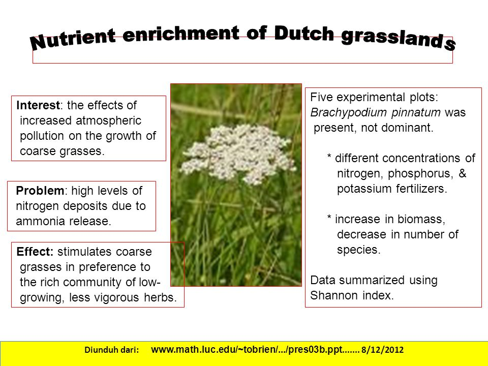 Nutrient enrichment of Dutch grasslands