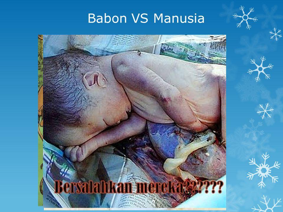 Babon VS Manusia