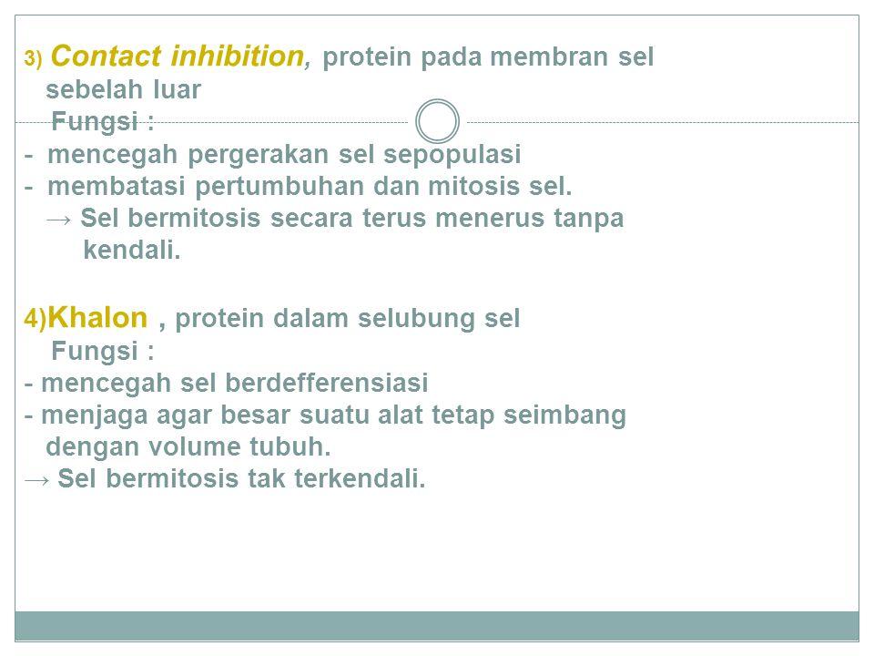3) Contact inhibition, protein pada membran sel sebelah luar Fungsi : - mencegah pergerakan sel sepopulasi - membatasi pertumbuhan dan mitosis sel.