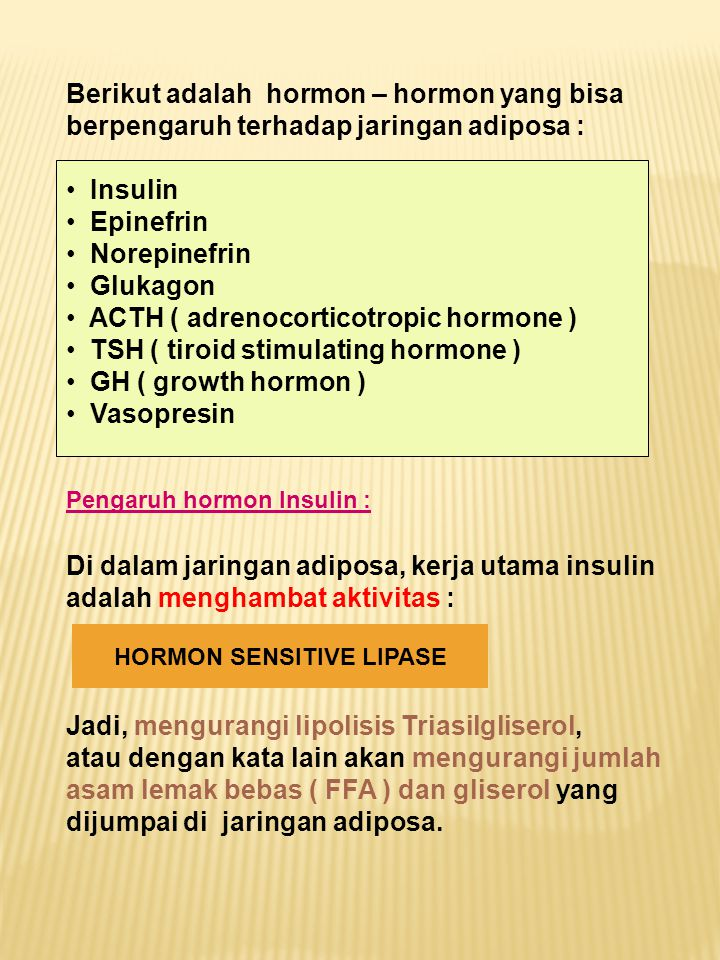 HORMON SENSITIVE LIPASE