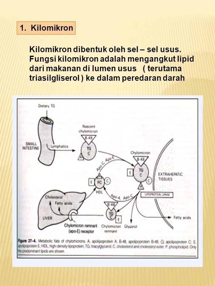 1. Kilomikron Kilomikron dibentuk oleh sel – sel usus.