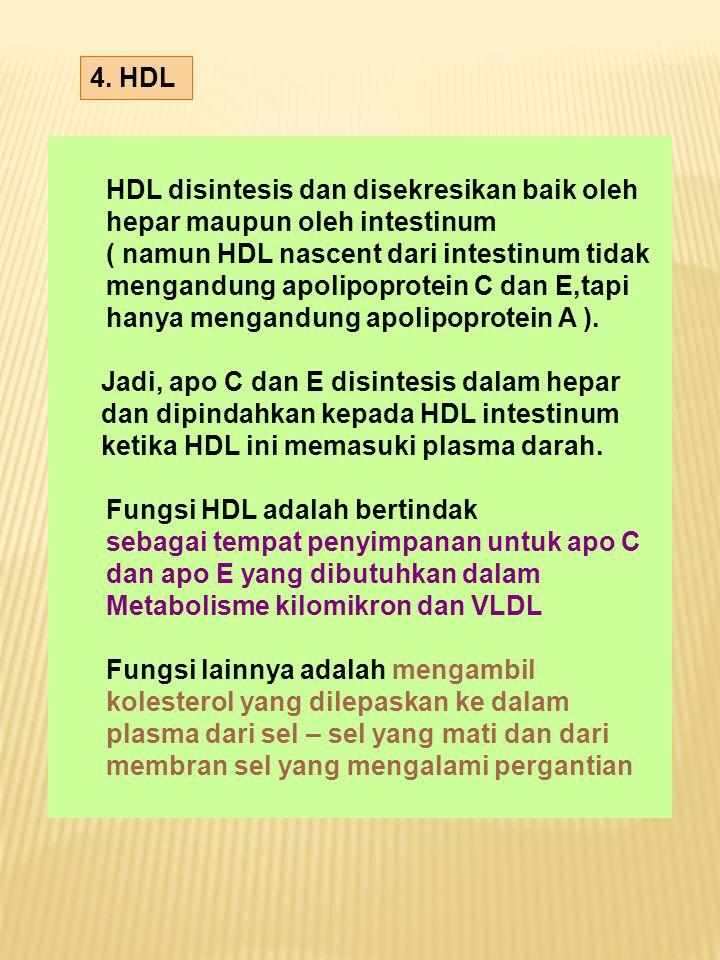 4. HDL HDL disintesis dan disekresikan baik oleh. hepar maupun oleh intestinum. ( namun HDL nascent dari intestinum tidak.